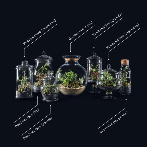 terraroom-terrariums-legende-sizes