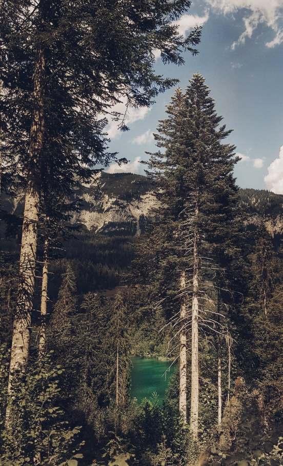 Among trees- turquoise crestasee